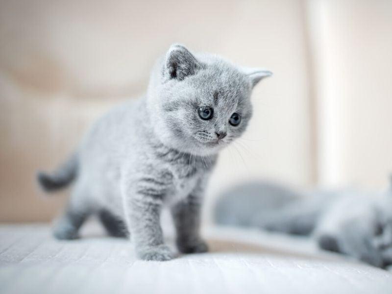 masalah ibu dengan kucing yang dibela di rumah